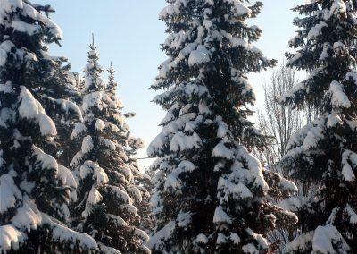 Winterimpressionen aus dem Jahre 2010: Schneebedeckte Bäume oberhalb der Brandhalde.