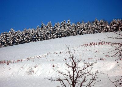 Winterimpressionen aus dem Jahre 2010: Oberhalb des Ziegelhofs.