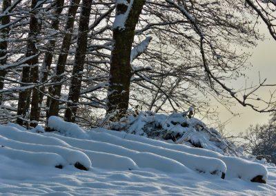 Januar 2016: Winterliche Impressionen oberhalb des Parkplatzes, Höhe Offenburgerhof.