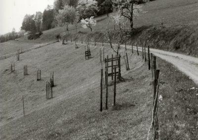 Schwarz-Weiß-Impressionen aus dem Frühjahr 1988: Oberhalb des Oberrains.