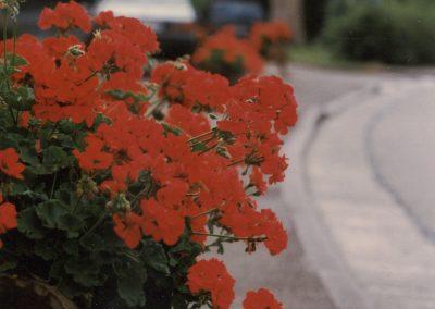 In der 1990er-Jahren prägten aus Baumstämmen gefertigte Blumentröge das Ortsbild entlang der Hauptstraße. Diese Aufnahme stammt aus dem August 1996.