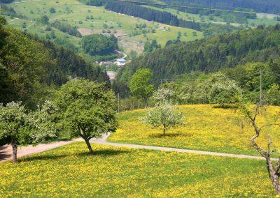 April 2011: Blick vom Lieberatsberg runter ins Dorf.
