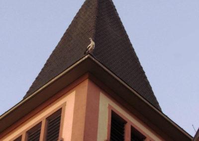 Noch ein seltener Anblick: Störche in Dörlinbach. Im Juni 2021 sind die Adebars des Öfteren Gast auf dem Turm der Sankt-Johannes-Kirche, wo sie die Nächte verbringen.