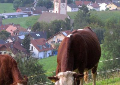 August 2021: Kuh- und Dorfansichten vereint auf einem Foto.