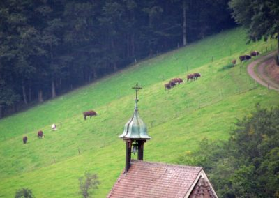 August 2021: Kühe sind im und rund um den Ort in allen Hanglagen – wie hier oberhalb der Brandhalde – anzutreffen. Im Vordergrund die Gedächtniskapelle auf dem Kappelberg.