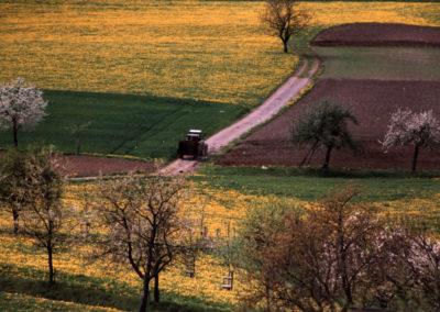 Mai 1998: Blühende Landschaften auf der Westsseite.